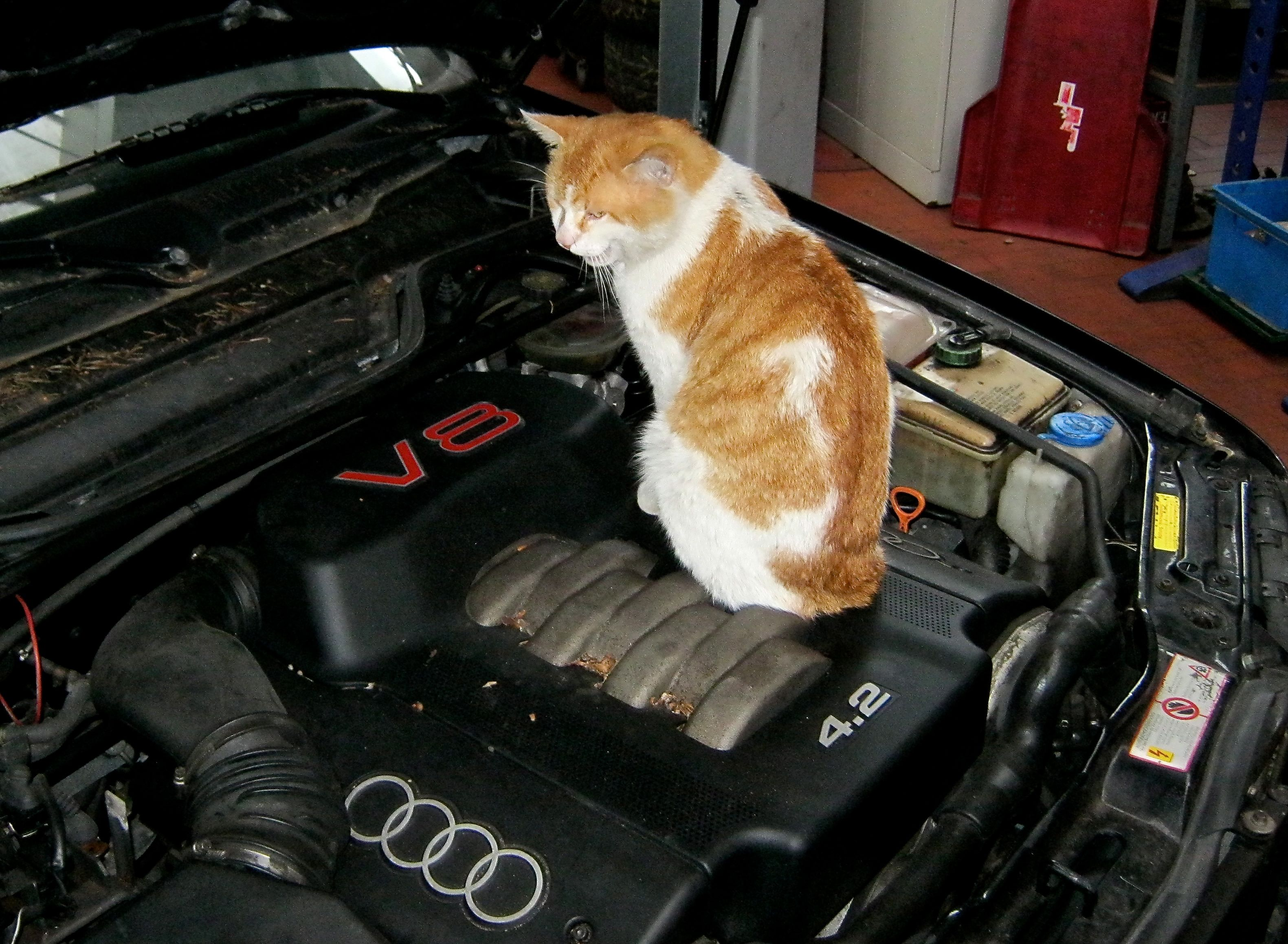 Der Chef liebte große Motoren